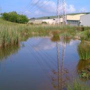 Monográfico sobre restauración ambiental en UNED Cantabria